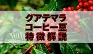 【コーヒー豆解説】グアテマラ(ガテマラ)産の特徴と7大産地 アイキャッチ