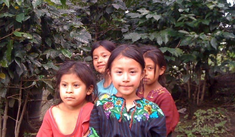 おさえておきたい【グアテマラのコーヒー豆】 通販も合わせて紹介