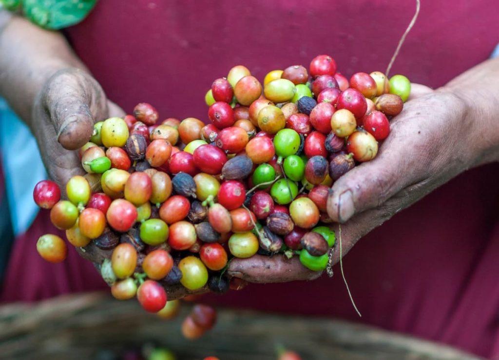 コーヒー豆は銘柄で選ぶと失敗します!【危険度ランキング】