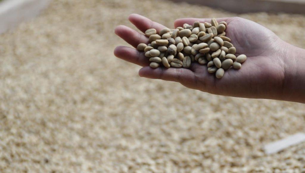 コーヒー豆は種類が多く珍しいものもたくさん