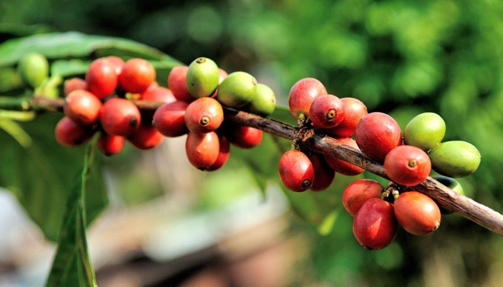 コーヒー豆 国別おすすめ銘柄