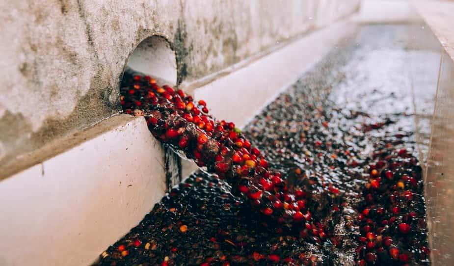 コロンビアコーヒー種類と生産方法
