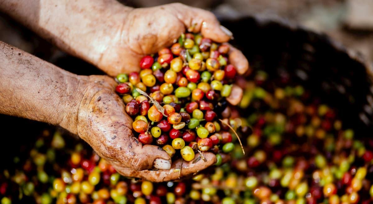 まとめ コーヒーが美味しい国ランキング TOP10