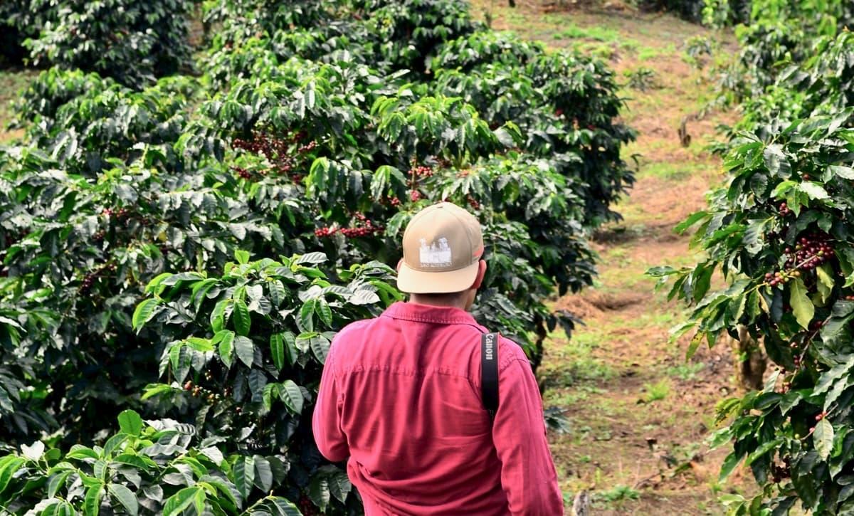 GNI(国民総所得)でみるコーヒー生産国