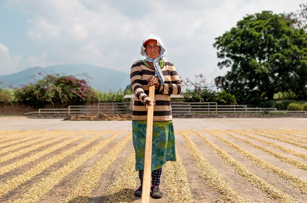 まとめ コーヒー豆ブラジル産の特徴