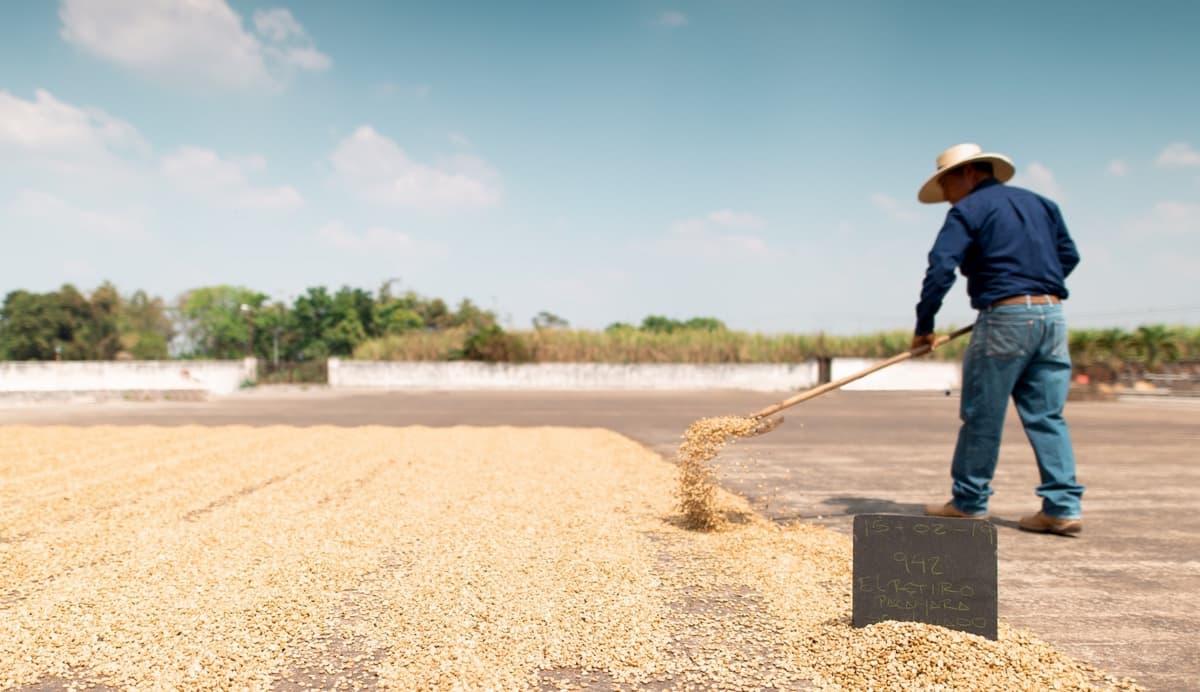 まとめ コーヒー豆 有名な国で選ぶのは危険です