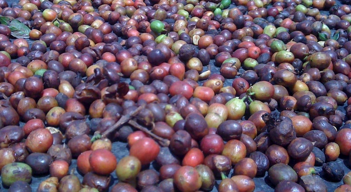 グアテマラ産コーヒーの等級
