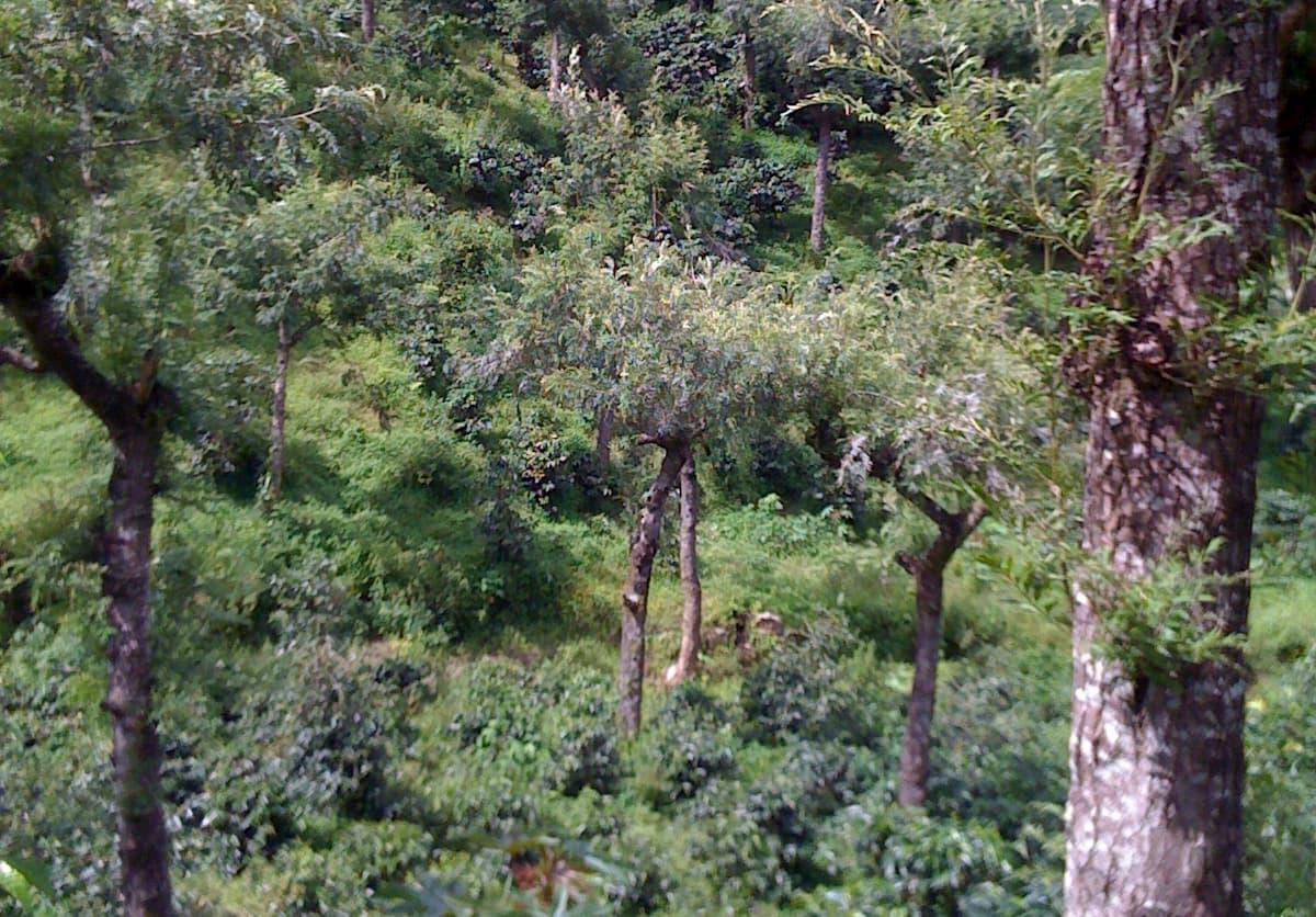 グアテマラ産コーヒーの産地
