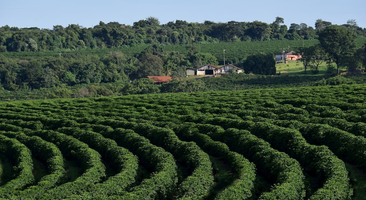 コーヒー豆 ブラジルの特徴を解説