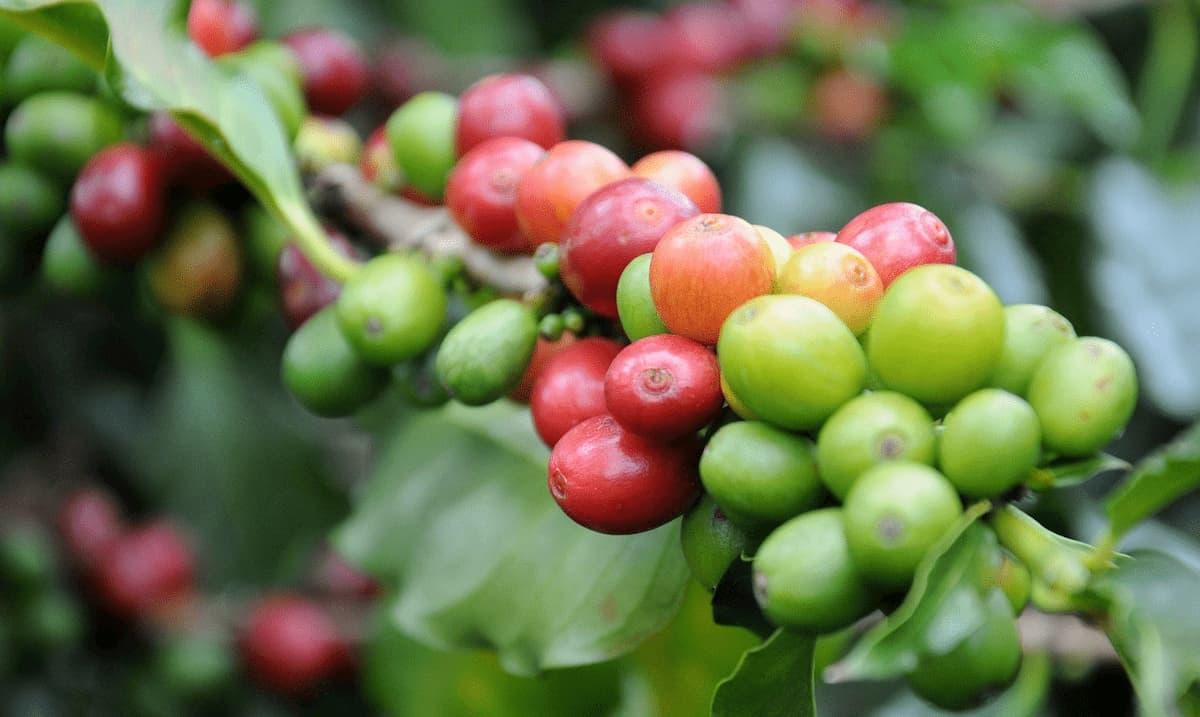 コーヒーの酸味の抑え方 【酸味を消す・抑える3つのドリップ方法】