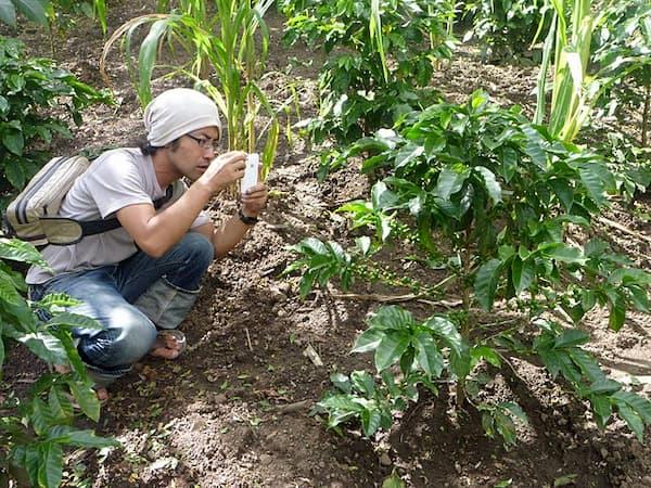 コーヒー農園で働く