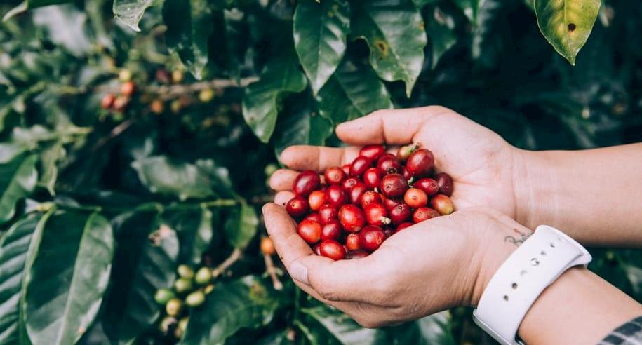 それぞれの焙煎具合に適正のあるコーヒー豆