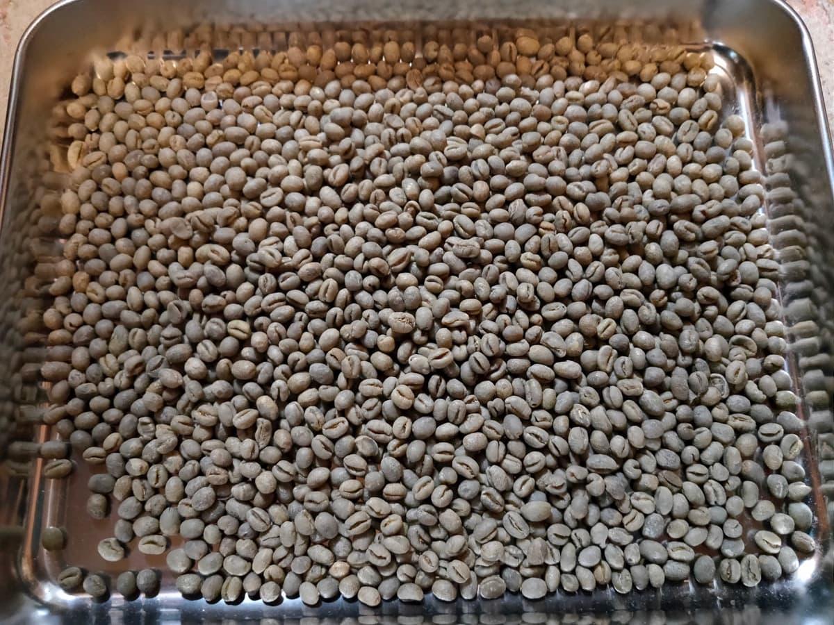コーヒー生豆の欠点豆の種類とハンドピック