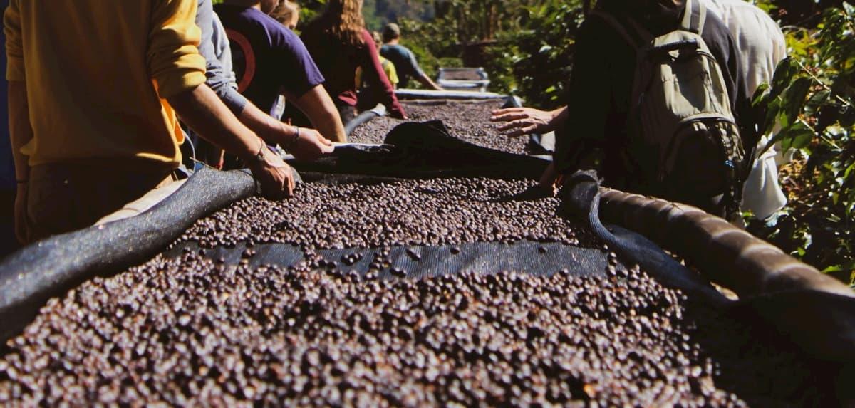 【コーヒー生豆の仕入れ方】取引の流れと仕入れ先について