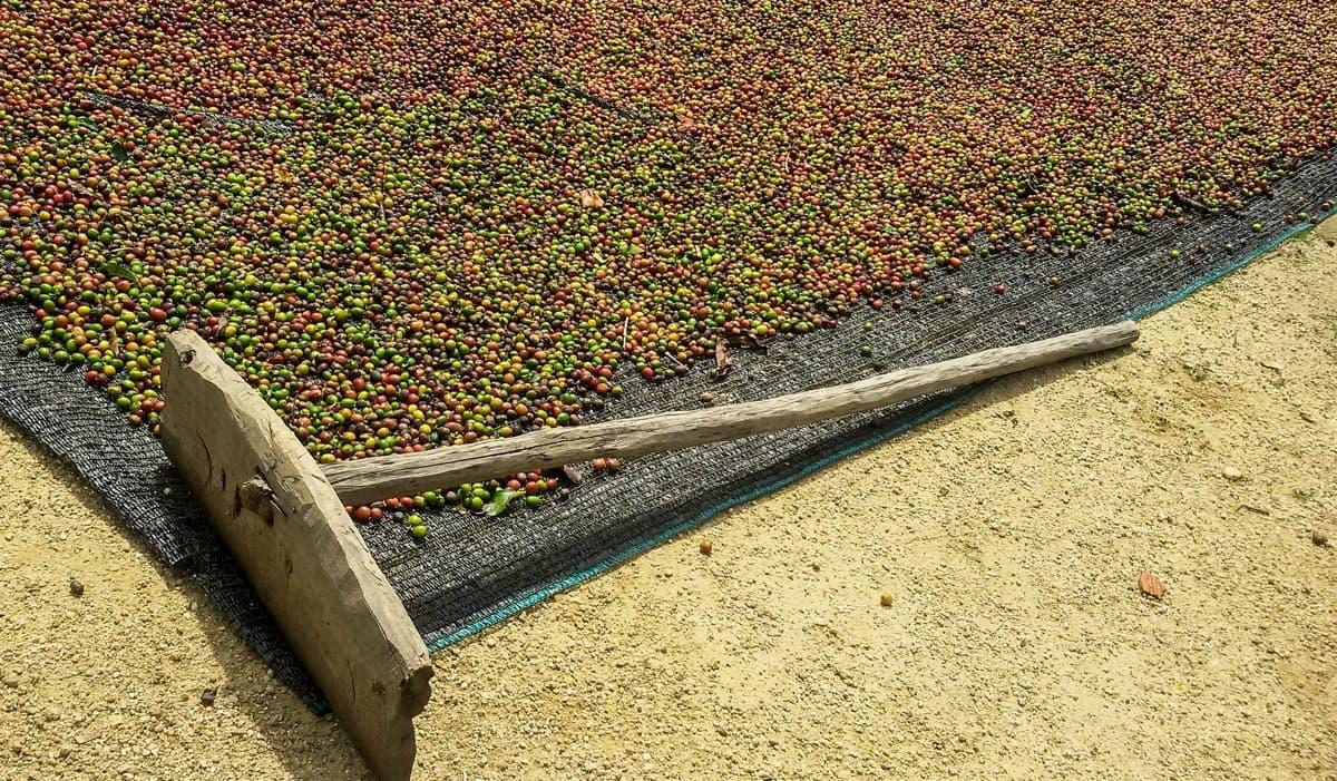 コーヒー生豆 その他の選び方