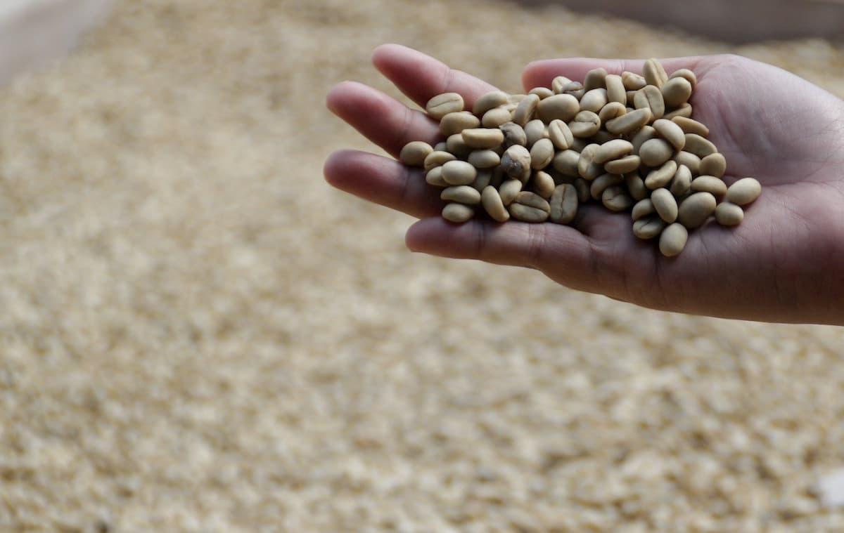 【コーヒー生豆の選び方】プロが豆選びの基礎を簡単に解説 まとめ