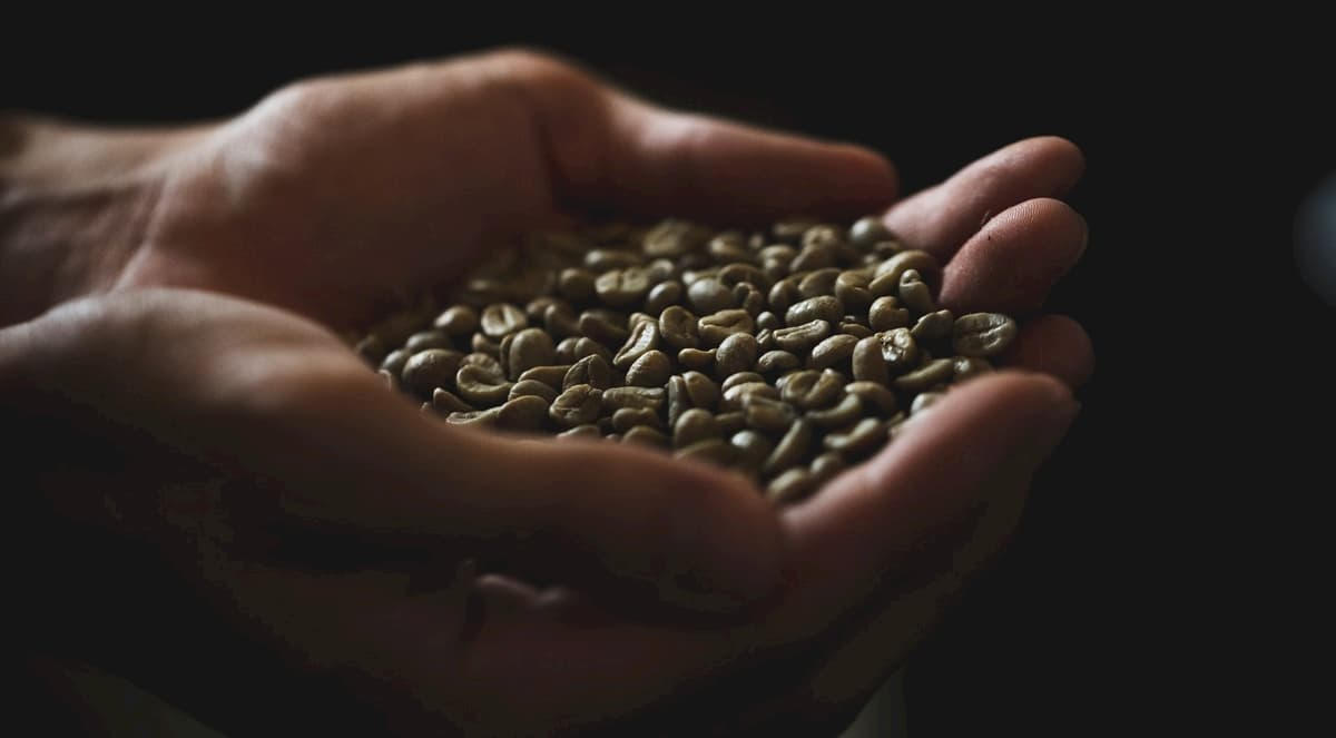 【コーヒー生豆の仕入れ】サンプルについて