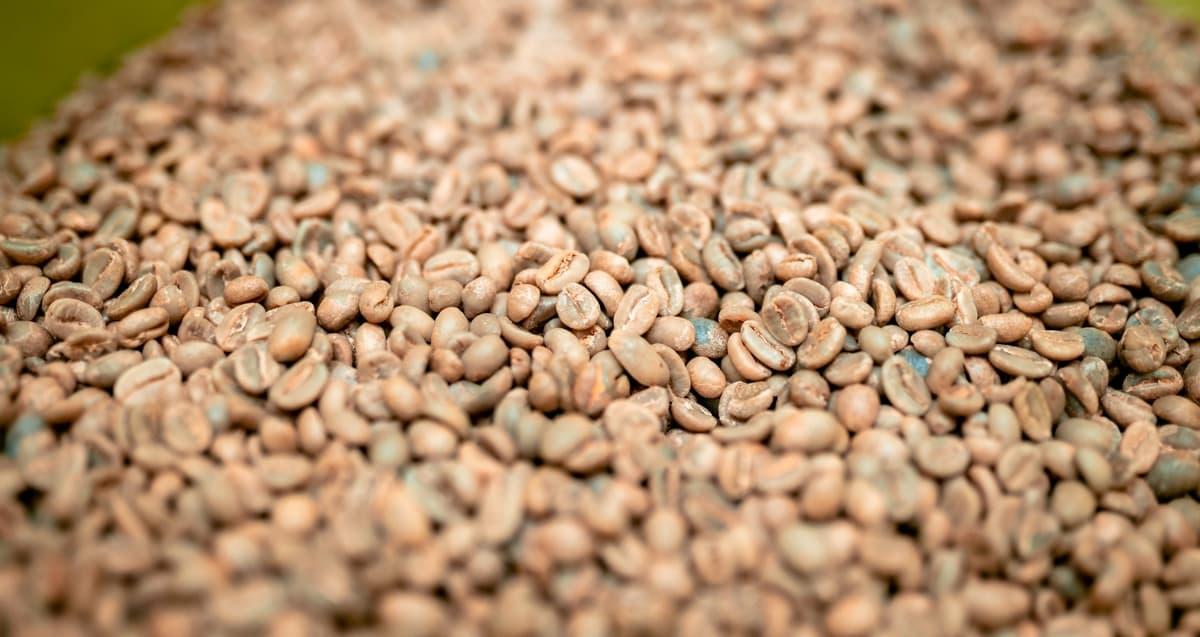 コーヒー生豆 欠点豆の種類とハンドピックについて まとめ