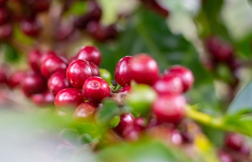 レッドハニー製法のおすすめコーヒー豆