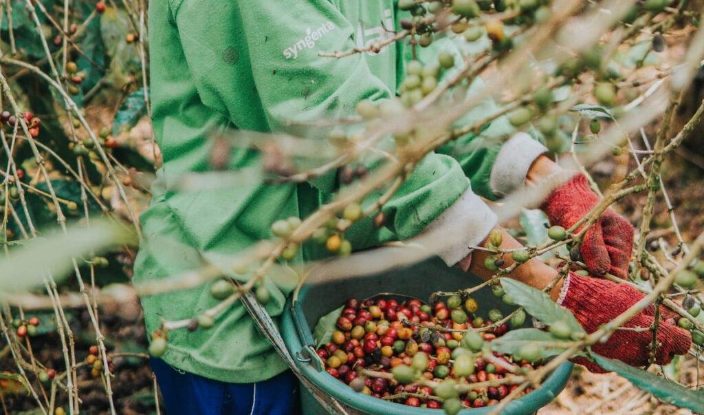 中米エリアのコーヒー生豆のグレード・等級
