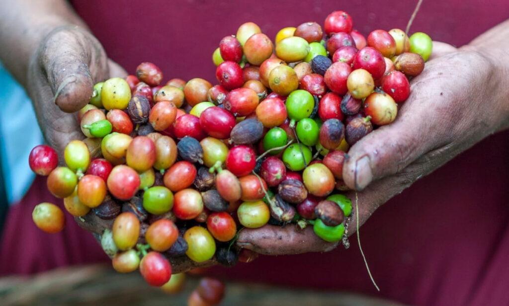 各国のコーヒー生豆のグレード・等級一覧
