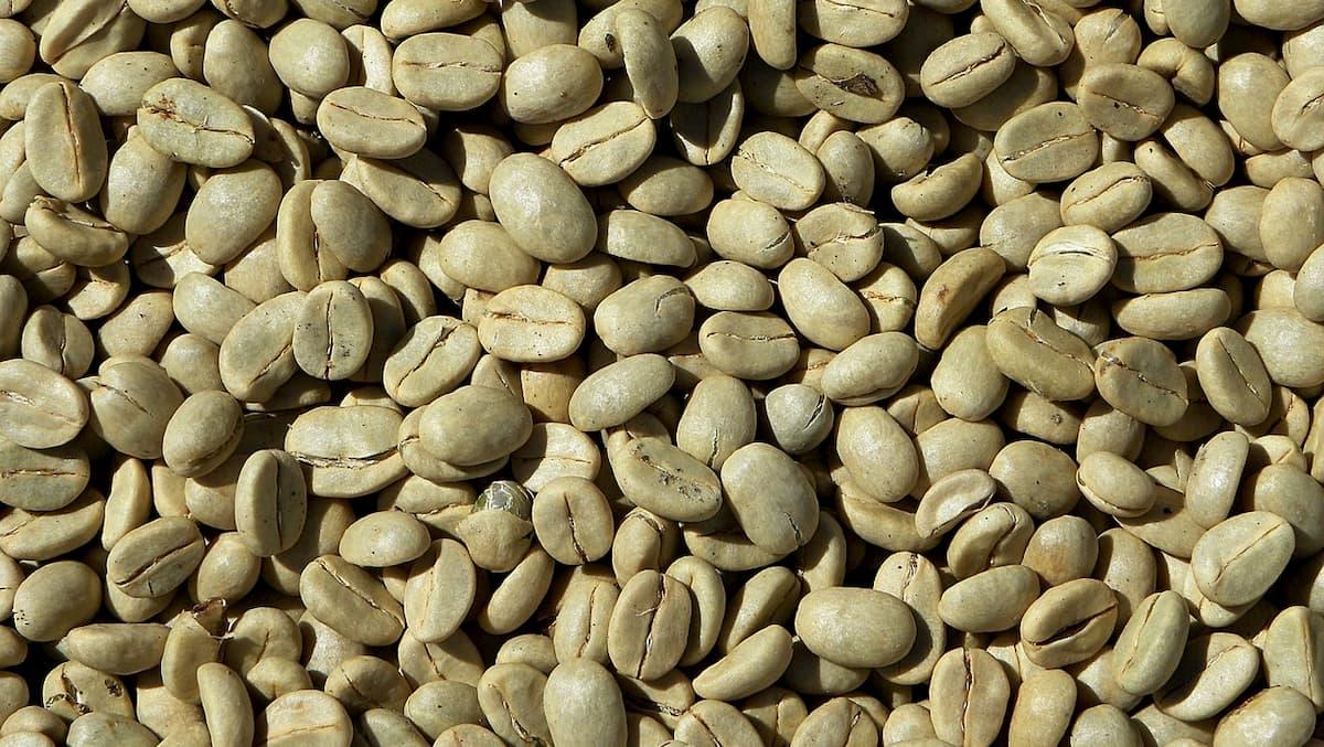 焙煎前のコーヒー豆は「生豆(なままめ)」といいます